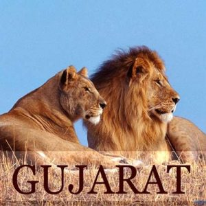 Gujrat Gir Diu Holiday