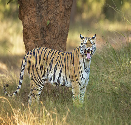 Bandhavgarh Tour Package