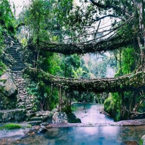 Root-bridges-in-Shillong